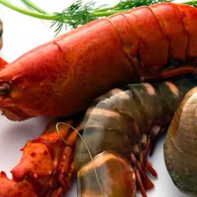 Le Comptoir des Mers, pour un plateau de fruits de mer à deux pas de la Seine